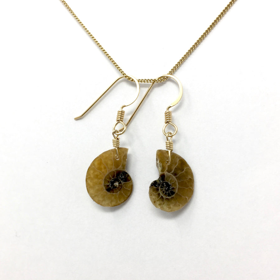 Fossilized Ammonite with Gold Earrings