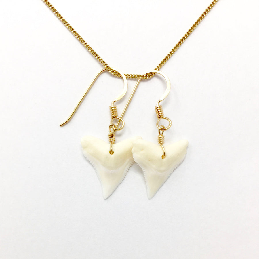Shark Tooth with Gold Earrings