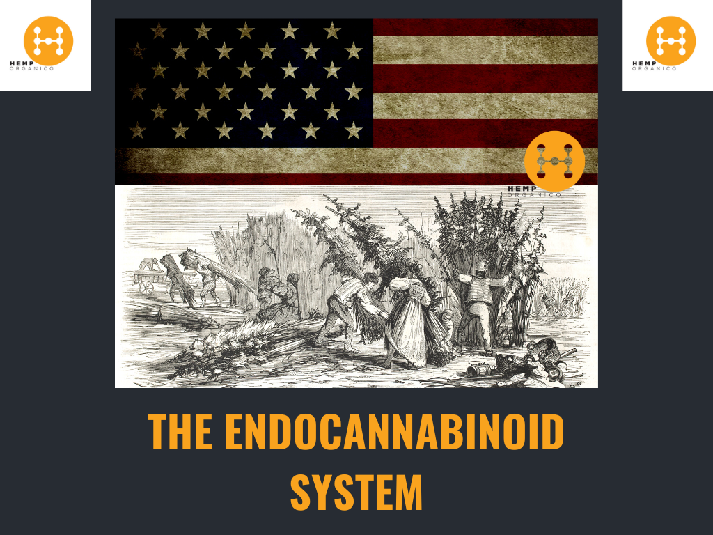 The Endocannabinoid System and CBD dosage size