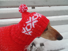 Load image into Gallery viewer, Warm hat for dog or cat, hat for a dog, hat for small dog, hat for dachshund, knitted hat, warm ears of dog