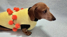 Load image into Gallery viewer, Sweater for a dog lot of pompons, sweater Halloween for dog
