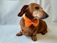 Bow collar for dachshund or small dog - dachshundknit