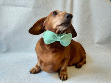 Load image into Gallery viewer, Bow collar for dachshund or small dog