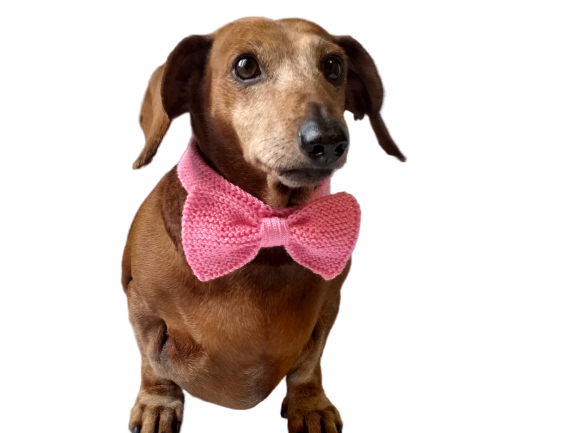 Knitted dachshund collar bow tie