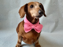 Load image into Gallery viewer, Knitted dachshund collar bow tie