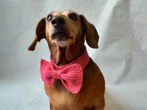 Knitted dog collar bow tie