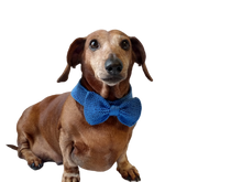Load image into Gallery viewer, Bow collar for dog or cat