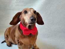Load image into Gallery viewer, Knitted collar bow for dog or cat