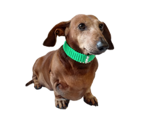 Load image into Gallery viewer, Collar for dog or cat,gift collar for dog