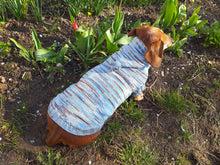 Load image into Gallery viewer, Knitted hoodie sweater for dog, hoodie for miniature dachshund