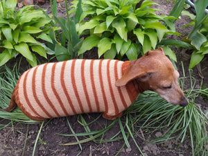 Clothing for dachshunds brown striped sweater for dachshunds