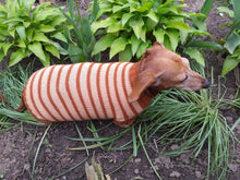 Load image into Gallery viewer, Clothing for dachshunds brown striped sweater for dachshunds
