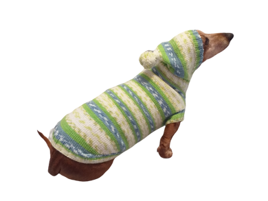 Clothing for dachshund or small dog with sweater with hoodie