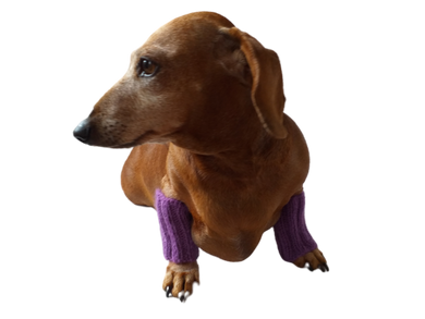 Angora wool dog leggings, dachshund leggings, warm dog paws, warm dachshund paws, dog clothes leggings, dachshund clothes leggings