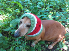 Load image into Gallery viewer, Watermelon dog clothes hat snood, dachshund snood Watermelon