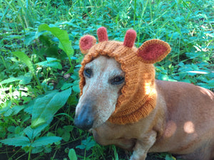 Giraffe dog clothes hat snood, dachshund snood Giraffe