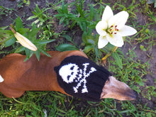 Load image into Gallery viewer, Halloween hat for dog with skull and cross bones