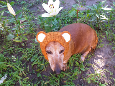 Dachshund grizzly bear hat snood, dog clothes hat snood bear
