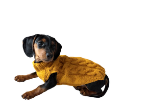 Knitted sweater for dogs, clothes for dachshunds, sweater for dogs, clothes for dogs, sweater for small dogs, dachshund sweater