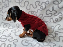 Load image into Gallery viewer, Wine-colored knitted sweater for dachshund dog, clothes for dachshunds, sweater for dog, clothes for dog, sweater for small dogs