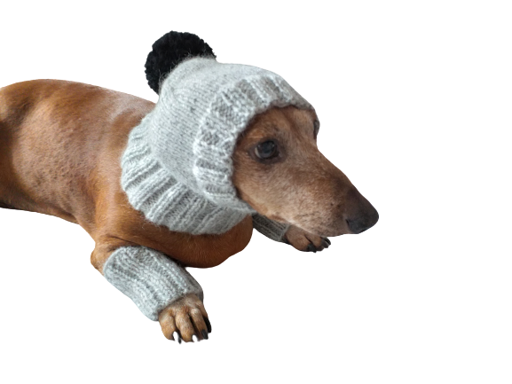 Leggings and hat set for dogs, leggings and hat for dachshund, warm head and paws for dogs, Dog Legwarmer