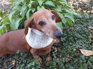 Dachshund or small dog scarf snood - dachshundknit