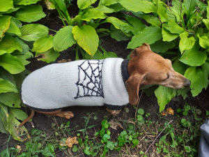 Halloween costume with spider for dachshund dog - dachshundknit