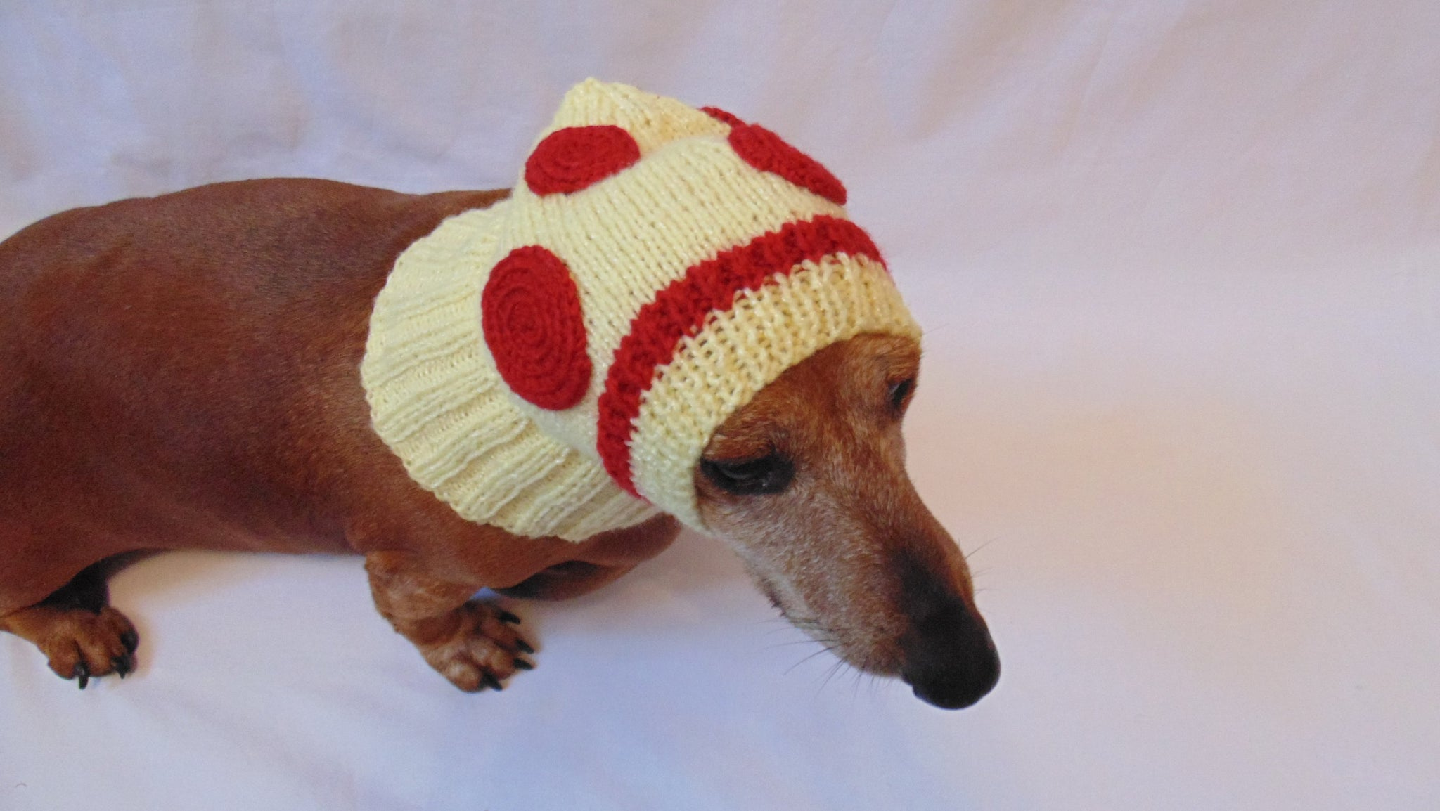 Hat Dog Pizza Hat Pizza For Small Dog Dachshundknit