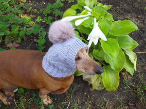 Hat for small dog with big pompom rabbit - dachshundknit
