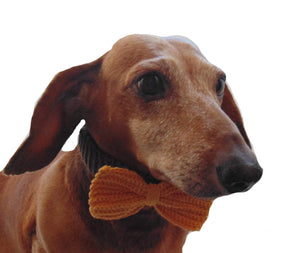 Knitted collar bow for dog cat,collar bow for dog cat - dachshundknit