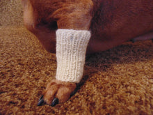 Load image into Gallery viewer, Knitted leggings for small dogs set on the front paws, dog leggings, dog wrist warmers, mini dachshund leggings, small dog leggings - dachshundknit