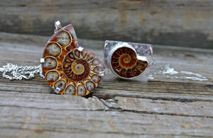 Ammonite Pieces From my studio 2021