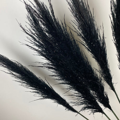 The Yasmine - XL Black Fluffy Pampas Grass