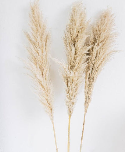 The Yasmine - XL Beige Fluffy Pampas Grass