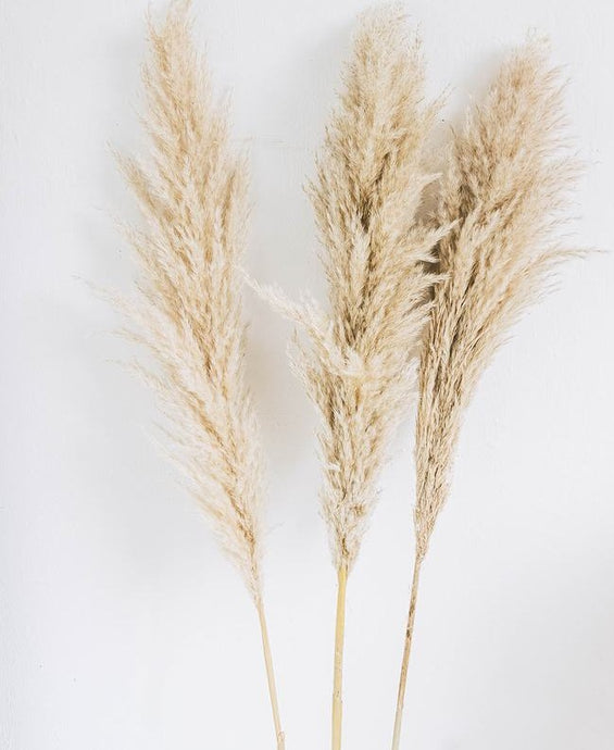 The Yasmine - XL Beige Dried Pampas Grass