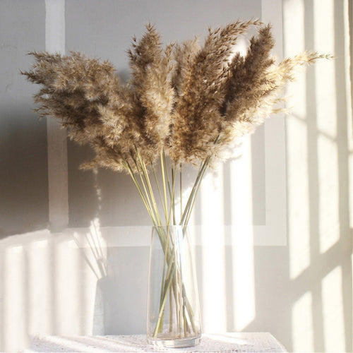 The Yasmine - Large Beige Dried Pampas Grass