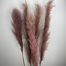 Load image into Gallery viewer, The Yasmine - XL Dark Dusky Pink Pampas