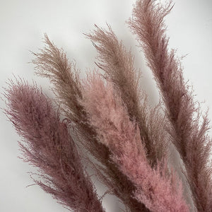 The Yasmine - XL Dark Dusky Pink Pampas