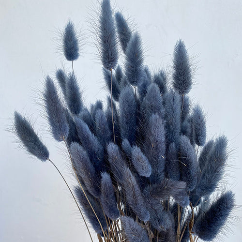 The Yasmine - Cool Blue Bunny Tail Grass