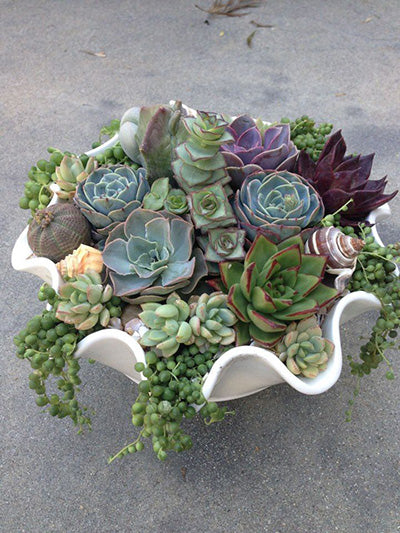 Top 10 Succulent Decorating Ideas Save On Crafts