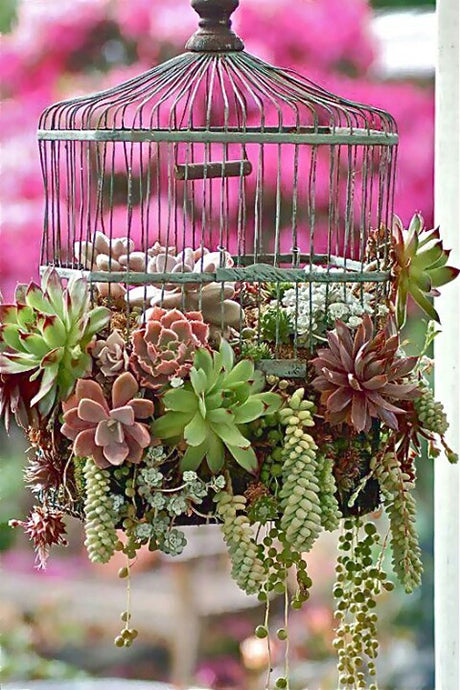 Top 11 Wedding Bird Cage Ideas