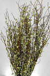 natural huckleberry branches with green berries 36 branches 20 inch