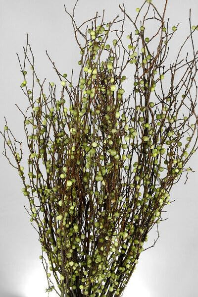 Natural Huckleberry Branches with Green Berries - 20 Inch