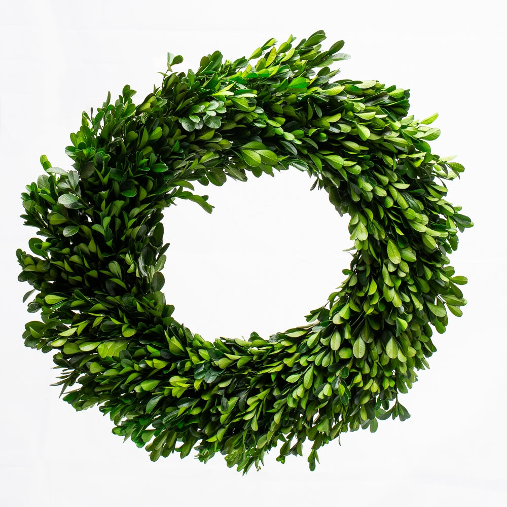 richland preserved boxwood wreath 17 set of 6