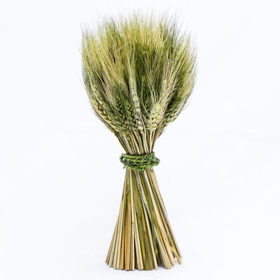 richland preserved stand up wheat bundle