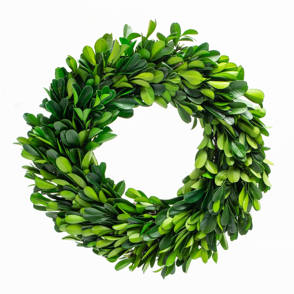 "Richland Preserved Boxwood Wreath 8"" Set of 12"