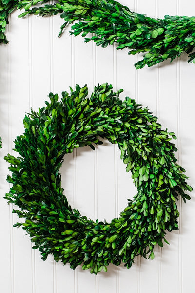"Richland Preserved Boxwood Wreath 17"" Set of 6"