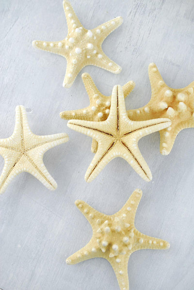 armored starfish 4 5in pack of 7