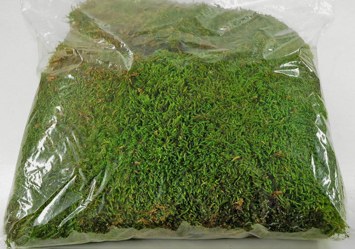 Moss Preserved 1.1 lbs