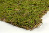 "Preserved Natural Moss 18"" x 16"" Roll"